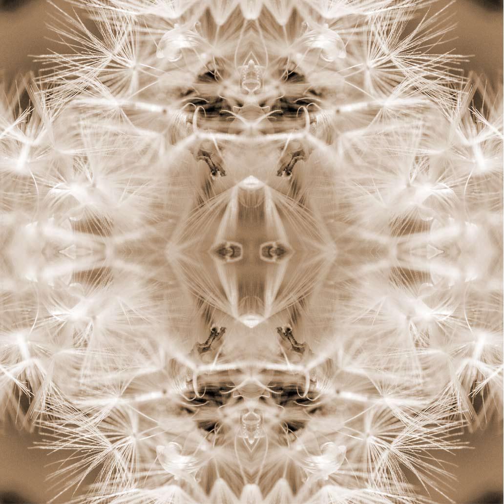 17- Schirmflieger-Mandala